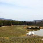 Pohjois-Georgian viinitiloilla